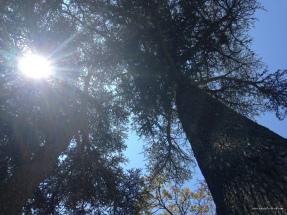 arbres 3