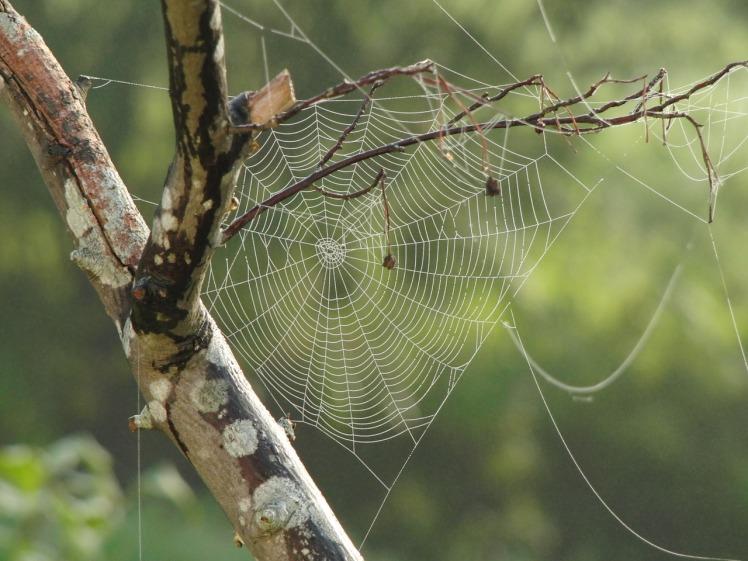 spider-web-617769_1280